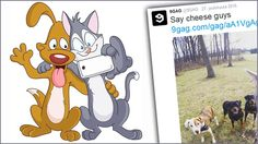 Nyt on somaa! Kissa poseeraa yhteisessä selfiessä koirien kanssa!  http://www.iltasanomat.fi/lemmikit/art-1451784788044.html
