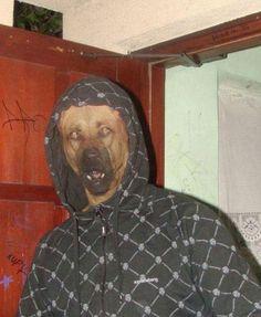 Dog wearing hoody