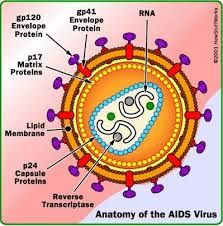 Viral & Bacterial Diseases, Signs & Symptoms, Curing, Prevention: AIDS (Aquired Immune Deficiency syndrome)