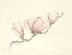 Chinese Magnolia Flower Blossom - Floral Illustration Series by Danabordelonfineart on Etsy