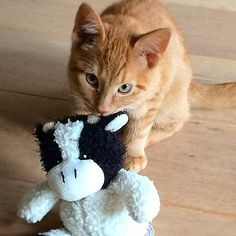 Me and my cow