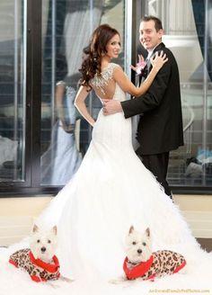 westies and a wedding, would so do this Westies, Westie Puppies, Dog Wedding, Dream Wedding, Bush Wedding, Wedding Things, Summer Wedding, Wedding Stuff, Kyle Bush