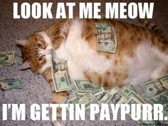 stick to dogs..cats will seal your money...