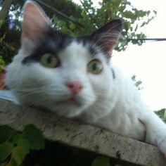 Ciao, sono Mimmo il gattone di casa