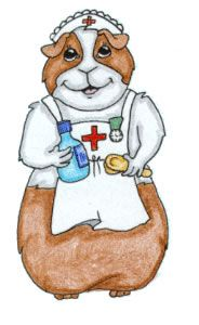 How To Do A Guinea Pig Health Check - good info to know for your pig's long term health