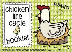 Chicken Life Cycle Booklet freebie