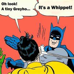 It's a Whippet!