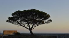 Tree by the sea by Michel L'HUILLIER on 500px