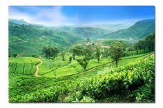 Shomal - Landscapes of Ramsar