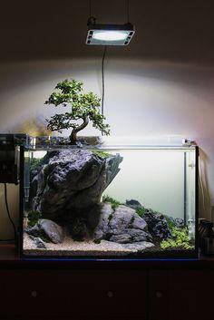 60L Planted Aquarium 06.07.2012