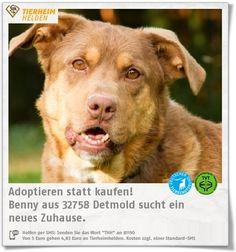 Benny wurde wegen Überforderung im Tierheim Detmold abgegeben.    http://www.tierheimhelden.de/hund/tierheim-detmold/australian_shepard_mischling/benny/13075-0/