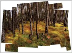 Art Projects for Kids: David Hockney Landscape - could do this with magazine pictures