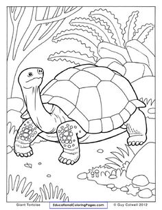 Ninja Turtles Coloring Pages Best Of tortoise Coloring Page at Getdrawings Ninja Turtle Coloring Pages, Superhero Coloring Pages, Coloring Book Pages, Printable Coloring Pages, Zoo Animal Coloring Pages, Petit Camping Car, Zentangle, Turtle Outline, Tortoise Color
