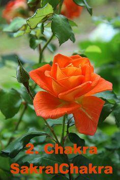 Farbe = orange Element = Wasser Aromen = YlangYlang & Sandel Steine: Karneol, Calzit, Goldtopas, oranger Beryll, Jaspis Orange, Chakra, Places To Visit, Rose, Flowers, Plants, Beautiful Images, Messages, Carnelian