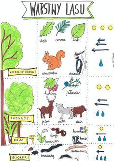 Polish Language, Primary Teaching, Craft Activities, Biology, Montessori, Children, Kids, Homeschool, Ebooks