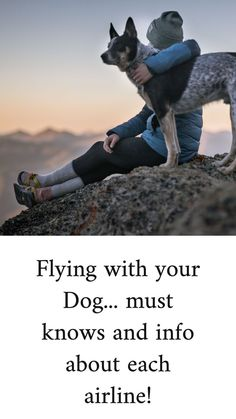 Flying with your Dog.must knows and info about each Airline! Goldendoodle Training, Baby Animals, Cute Animals, New Puppy, Boston Terrier, Traveling, Puppies, Dogs, Diy Ideas