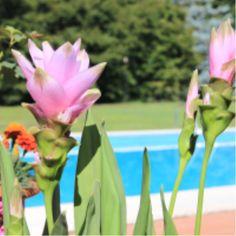 garden, flowers, water