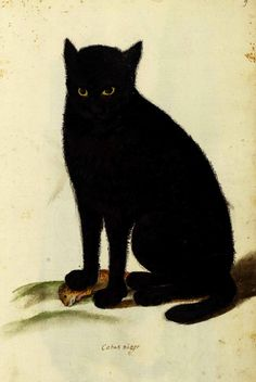Ulisse Aldrovandi (1522-1605 Italian) Black Cat