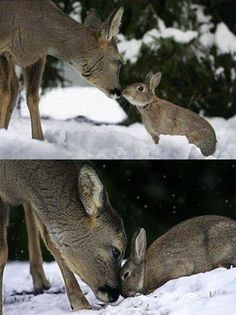 I think it might be Bambi and Thumper