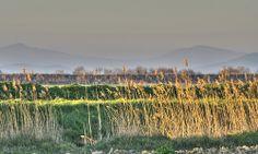 Paesaggio della Maremma - Landscape of Maremma (Tuscany, Italy)