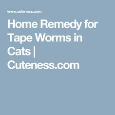 Natural Remedy For Worms In Dogs And Cats