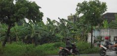 Tanah kering 750 m2 di tepi jl Soekarno Solo Baru.