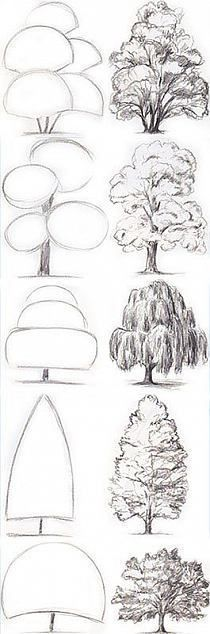 Drawing Tips Tree Drawing Tutorial. Start with basic geometric shapes. Drawing Techniques, Drawing Tips, Drawing Sketches, Painting & Drawing, Sketching Tips, Basic Drawing, Drawing Drawing, Drawing Skills, Basics Of Drawing