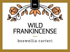 Wild Frankincense by Hilary Clarcq