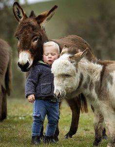 Donkeys and boy.