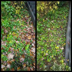 Gartenbeete mit Luft versorgen und Laub sammeln:-) #laub #unkraut #beete #gartenbeet #gartenpflege #herbstpflege #rösrath #begischgladbach