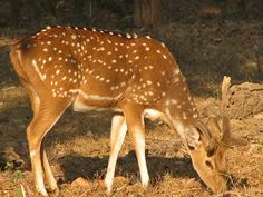 Animal Sanctuaries in Gujarat, India @ Sanctuariesindia.com