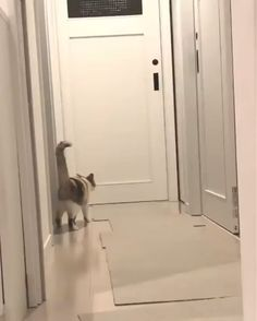 And his name is John Cena.-And his name is John Cena…… - Funny Animal Memes, Funny Animal Videos, Cute Funny Animals, Funny Animal Pictures, Cute Baby Animals, Cat Memes, Animals And Pets, Cute Cats, Funny Cats