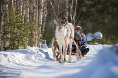 Unusual European Ski Resorts for Families | Mr Fox