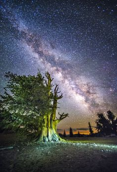 Do yourself a favor and enjoy this beautiful story. - A night under the stars with the world's oldest trees