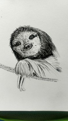 Sloth in a basket. Liner drawing in my sketchbook.