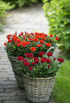 Buy Flowers Online Same Day Delivery Flower Baskets Good Morning Images Flowers, Good Morning Beautiful Images, Good Morning Inspiration, Diy Inspiration, Good Morning Photos, Good Morning Good Night, Good Morning Wishes, Morning Morning, Love Garden