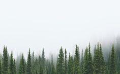 Mt. Rainier National Park / WA