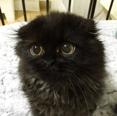 This Cat Might Have The Most Adorable Eyes You've Ever Seen