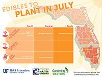 A graphic showing vegetables to plant in July for Florida