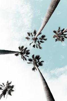 Palm tree, wallpaper, hd wallpapers and summer wallpapers HD photo by Wil Stewar… Palme, Tapete, HD-Tapeten und Sommertapeten HD-Foto von Wil Stewart (@ auf Unsplash Summer Wallpaper, Travel Wallpaper, Hd Wallpaper, Holiday Wallpaper, Nature Wallpaper, Tree Photography, Tumblr Photography, Photography Wallpapers, Photo Wall Collage