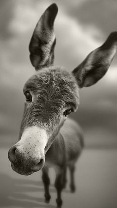 Just makes me smile… and think of Eddie Murphy's voice. Donkey! (Say it like Shrek, you know you want to.)