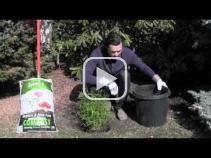 How to create an espalier tree
