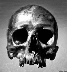 Skull by William-Glen