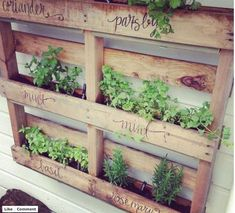 Beautiful way to have an herb garden if youre tight on space! Use an old pallet