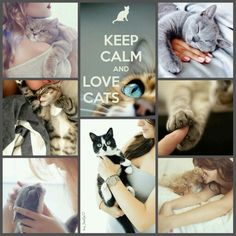 Keep calm and love International Cat Day! #moodboard #mosaic #collage…