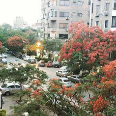 218 street #maadi #cairo #egypt