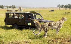 African Safe travels offer the best African Safari vacation packages at an affordable rate. So hurry up book your African Safari Trips. Up Book, Travel Tours, African Safari, White Sand Beach, East Africa, Ghana, Kenya, National Parks, Adventure