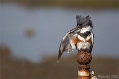 Nature and wildlife photography tips
