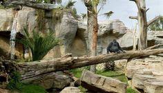 #Blog #Bioparc, un concepto diferente de #Zoo en #Fuengirola #turismo #naturaleza #malaga #andalucia #costadelsol