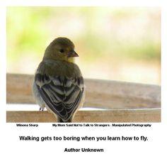 Learn to fly! - FollowYourDreams.com